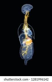 Vagus nerve with painful stomach and digestive system, 3D medically illustration on black background