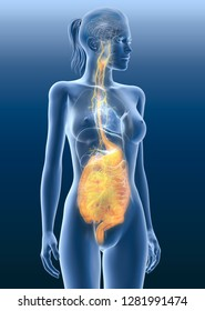 Vagus nerve with painul stomach and digestive system, 3D medically illustration