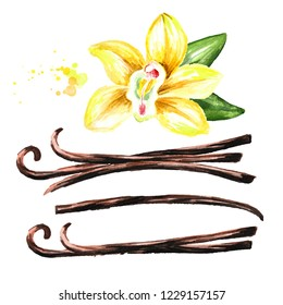 Vanilla set. Watercolor hand drawn illustration,  isolated on white background