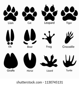 Various traces of cloven-hoofed animals. Boar, giraffe, horse, elk paws, Leopard, lion, tiger Frog, lizard, crocodile, paw turtle