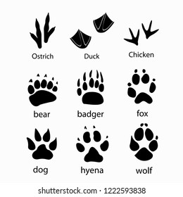 Various traces of wild animals poultry design icon