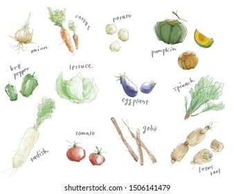various vegetables and roots 1