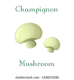 Vector champignon mushroom illustration. hand drawn creamy champignon isolated on white background. Edible white mushroom. Great for menu, label, product packaging, recipe and game design.