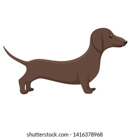 Vector Dachshund dog animal icon. Characters brown long dog breed dachshund. Illustration cartoon pet puppy dog dachshund in flat design.