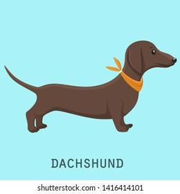 Vector Dachshund dog animal icon. Characters brown long dog breed dachshund. Illustration pet puppy dog dachshund.