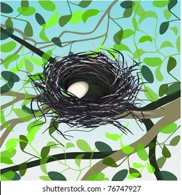 vector egg in nest on the tree