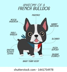 Vector fun icon pet dog french bulldog. Background anatomy of  dog breed French Bulldog. Illustration of pet puppy frenchie bulldog in flat style