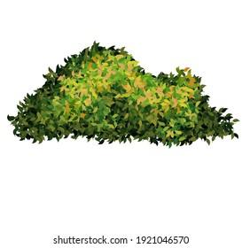 Vector green nature shrubs plant