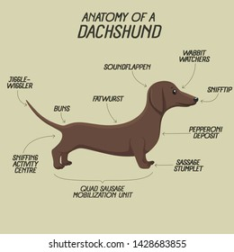 Vector icon animal dog dachshund. Background description of the anatomy of a dog breed dachshund. Illustration of a pet dachshund puppy in flat style