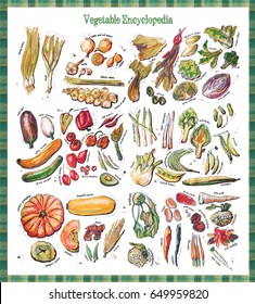 Vegetable Encyclopedia - all types of vegetables, hand drawn