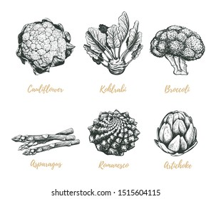 Vegetables collection illustration. Broccoli, asparagus, cauliflower, artichoke, kohlrabi, romanesco hand drawing. Vegetables sketch
