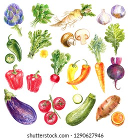 Vegetables drawn with colored pencils. Artichoke, paprika, eggplant, tomato, zucchini, Jalapeno, Horseradish, sweet potato, carrots, beets, peppers, mushrooms, garlic. Vegetarianism. Farm products.