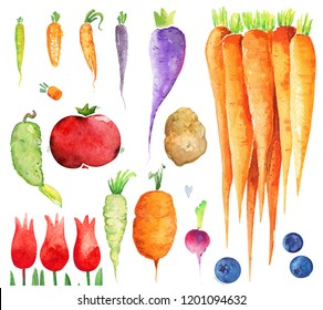Vegetables watercolor set isolated