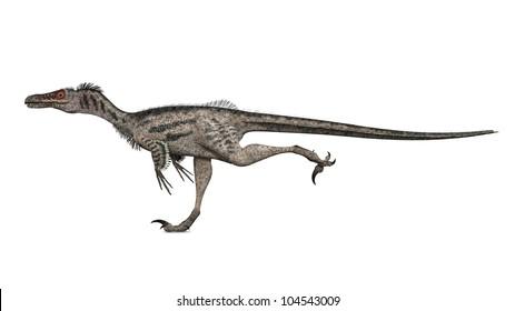Velociraptor Computer generated 3D illustration