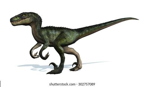 velociraptor dinosaur - isolated on white background