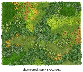 Vertical Garden Background and Texture. Green wall or flowerbed isolated on white background.Top view. 3D visualization