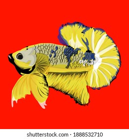 Very beautiful betta fish, in yellow, perfect for logo material