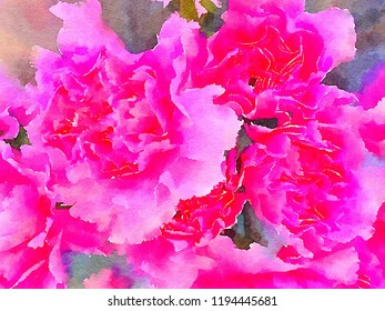 A very Beautiful Watercolor Painting of Pink Carnations