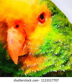 very Nice original Watercolor painting of a parrot