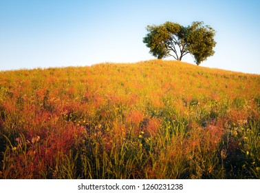Vibrant yellow hill covered with dense grass with a heart shaped tree on the top of the hill with and with blue sky in the background in the evening light. 3d illustration.