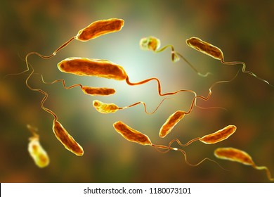 Vibrio cholerae bacteria, 3D illustration. Bacterium which causes cholera disease and is transmitted by contaminated water