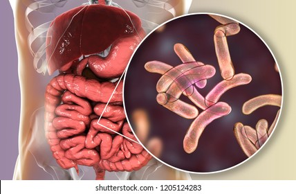 Vibrio cholerae bacteria in small intestine, 3D illustration. Bacterium which causes cholera disease and is transmitted by contaminated water