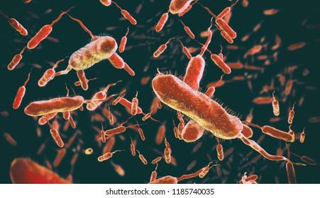 Vibrio cholerae, Gram-negative bacteria. 3D illustration of bacteria with flagella