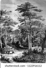 A View in the forest of Arcachon, vintage engraved illustration. Magasin Pittoresque 1858.