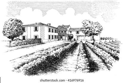 Villa and vineyard, vintage sketch