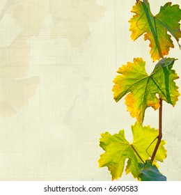 vine leaves grungy background
