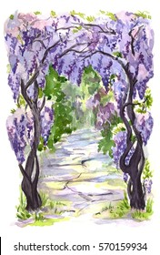 The vine wisteria blooming arch. Hand drawn watercolor illustration