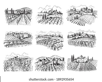 Vineyard landscape. Farm grape fields with houses agricultural hand drawn illustrations