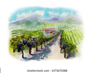 Vineyards Hand-painted watercolor landscape with vineyards, mountains and a house, isolated on a white background