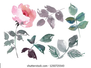 Vintage flowers set overwhite background. Wedding flowers bundle. Flower collection of watercolor detailed hand drawn roses.