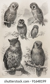Vintage owls types drawing - Picture from Meyers Lexicon books collection (written in German language ) published in 1906.