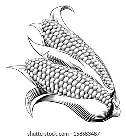 A vintage retro woodcut print or etching style sweetcorn illustration