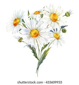 Vintage watercolor illustration, flowers bouquet of daisies, isolated illustration on white background