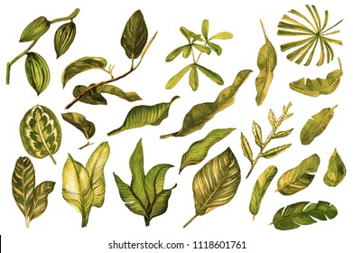 Vintage watercolor leaves. Set of palm leaves. Isolated tropical leaves on white background
