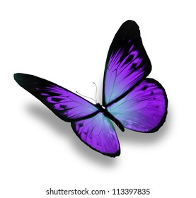 Violet butterfly flying, isolated on white background