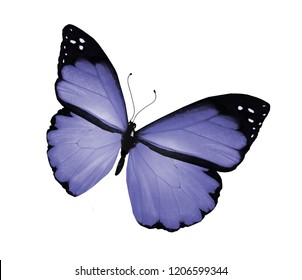 Violet butterfly on white