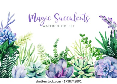Violet cactus and succulents plants, horizontal background, hand drawn watercolor illustration