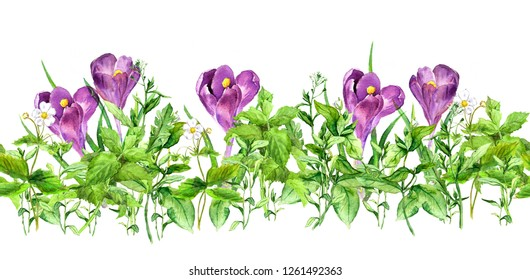 Violet crocus flowers and green grass. Horizontal seamless floral border. Spring flowers, springtime plants. Watercolor