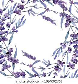 Violet lavender. Floral botanical flower. Wild spring leaf wildflower frame. Aquarelle wildflower for background, texture, wrapper pattern, frame or border.