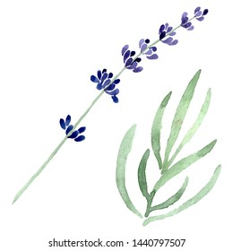 Violet lavender floral botanical flower. Wild spring leaf wildflower isolated. Watercolor background set. Watercolour drawing fashion aquarelle. Isolated lavender illustration element.