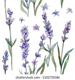 Violet lavender. Seamless background pattern. Fabric wallpaper print texture. Aquarelle wildflower for background, texture, wrapper pattern, frame or border.