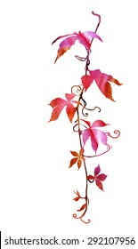 Virginia creeper twig