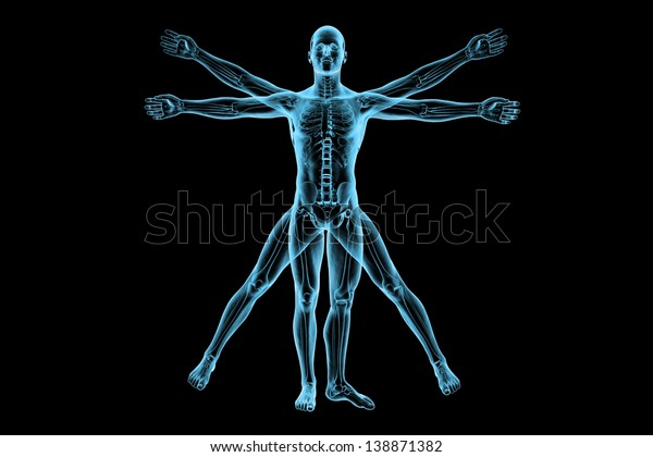 Vitruvian man with skeleton for study