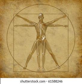 vitruvian-human-diagram-grunge-medical