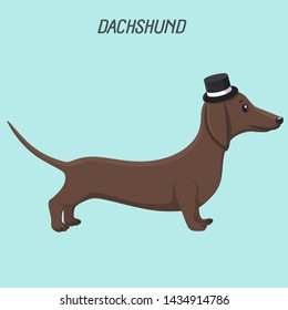vVector intage icon pet dog dachshund. Background dog breed dachshund in a  top cylinder hat. Illustration of pet puppy dachshund gentleman in flat style