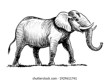 Walking African elephant. Ink black and white drawing